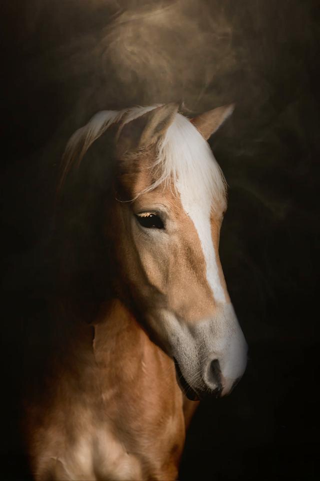 Ellen Pitlo Paardenportretten