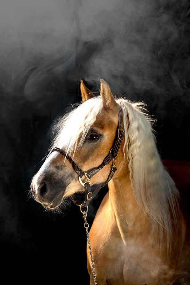Ellenn Pitlo Paardenportretten
