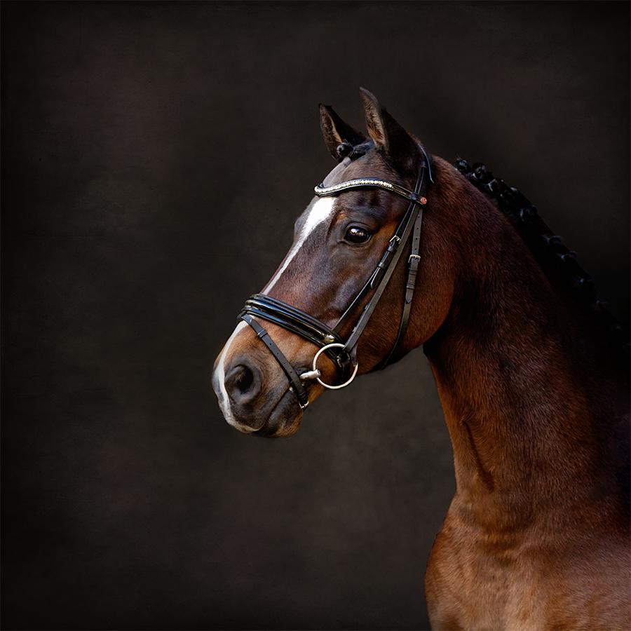 paardenfotograaf @ellenpitlofrotografie Pepper