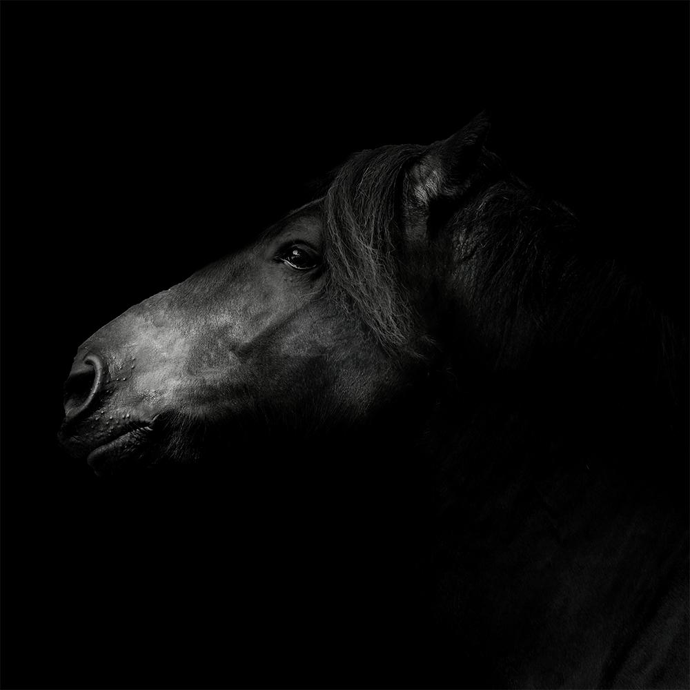 Paardenfotograaf Quinto @ellenpitlofotografie
