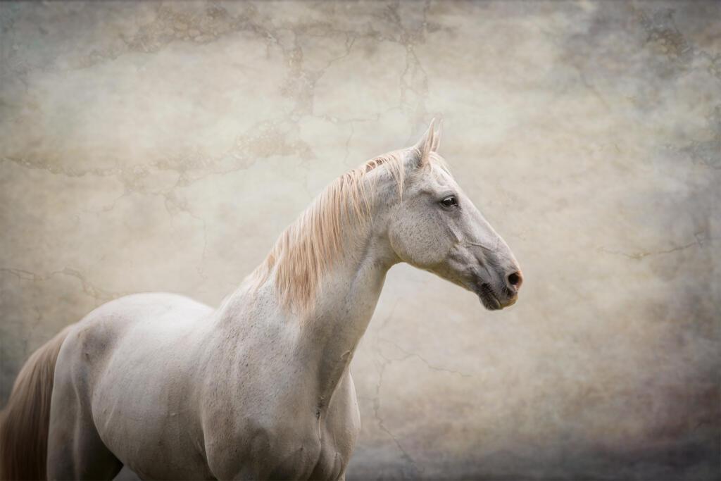 paardenfotograaf @ellenpitlofotografie schimmel heerde