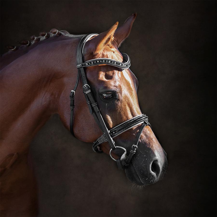 paardenfotograaf @ellenpitlofotografie Vestival