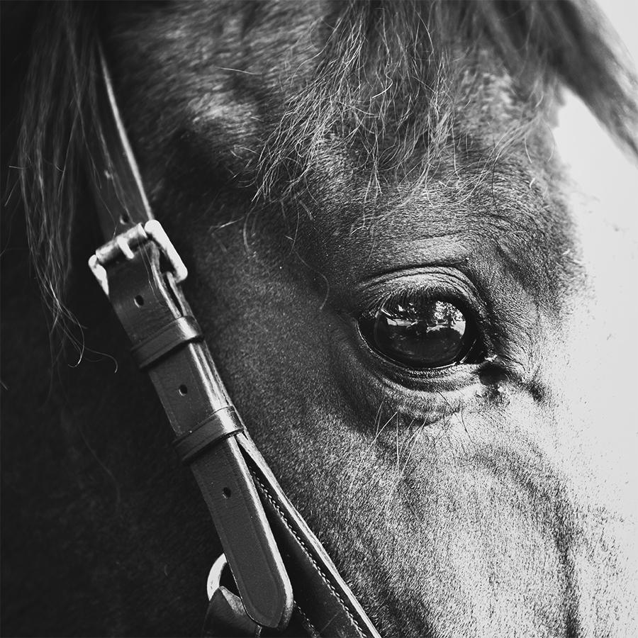 paardenfotografie @ellenpitlofotografie marlene