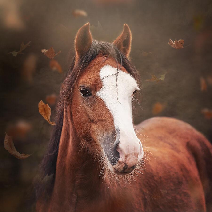 @ellenpitlofotografie pony herfst klein